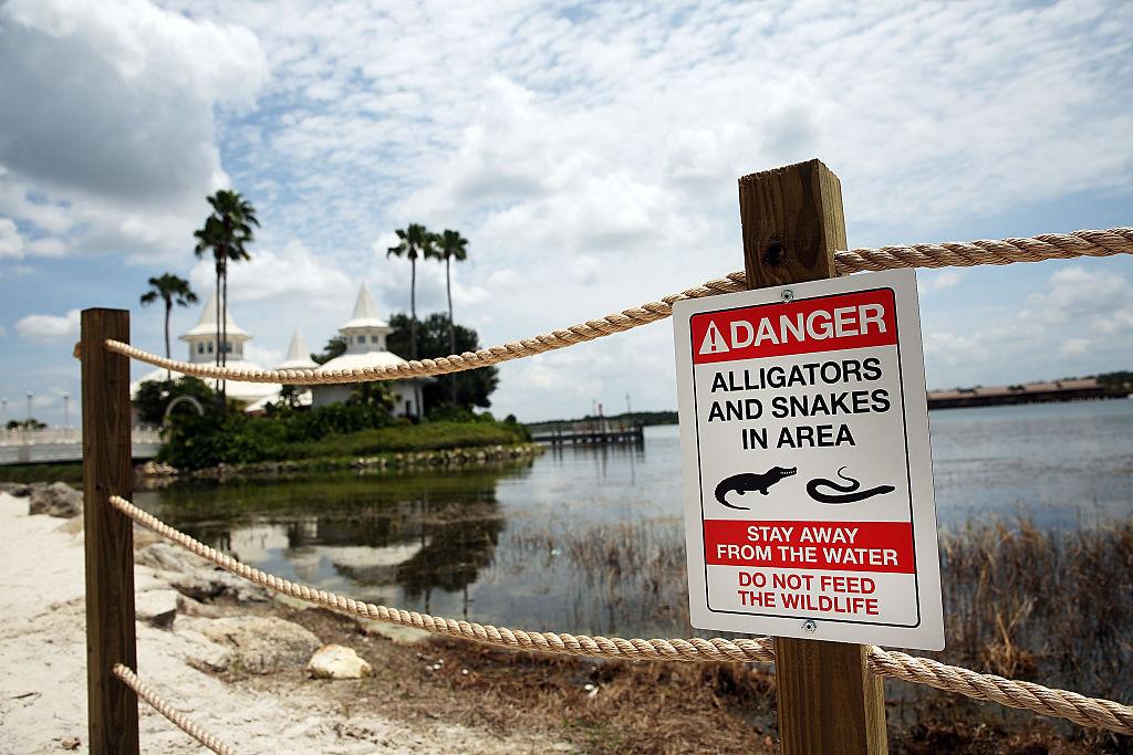 Arkivbilde med varselskilt ved Walt Disney World Hotel i Orlando i Florida, hvor en 2 år gammel gutt i 2016 ble dratt ut i vannet og drept (Spencer Platt/Getty Images)